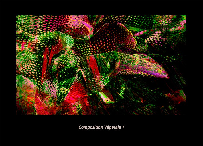 Composition Végétale - V1